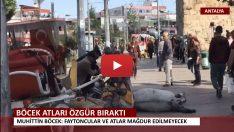 Antalya'da Atlar artık Özgür