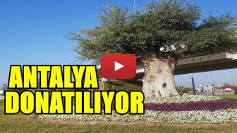 Antalya Çiçeklerle Donatılıyor