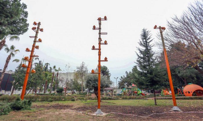 Kepez'de kuşlar evlerinde