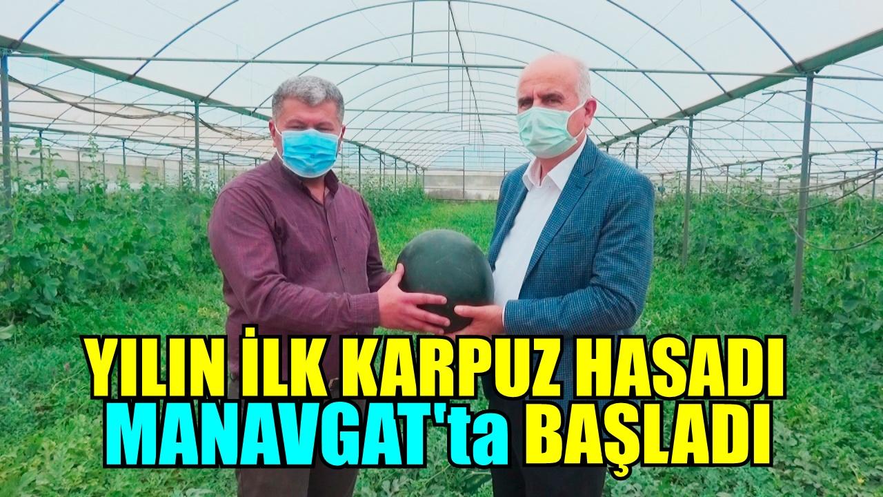 TÜRKİYE'NİN İLK KARPUZ HASADI MANAVGAT'TA BAŞLADI